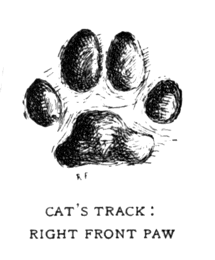CAT'S TRACK: RIGHT FRONT PAW