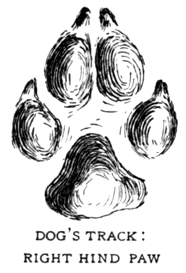 DOG'S TRACK: RIGHT HIND PAW