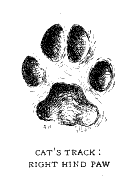 CAT'S TRACK: RIGHT HIND PAW