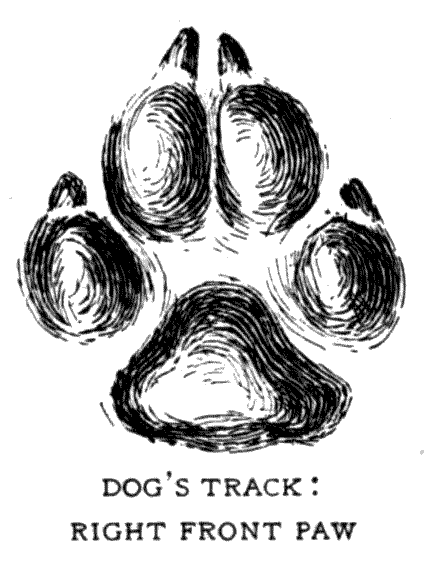 DOG'S TRACK: RIGHT FRONT PAW