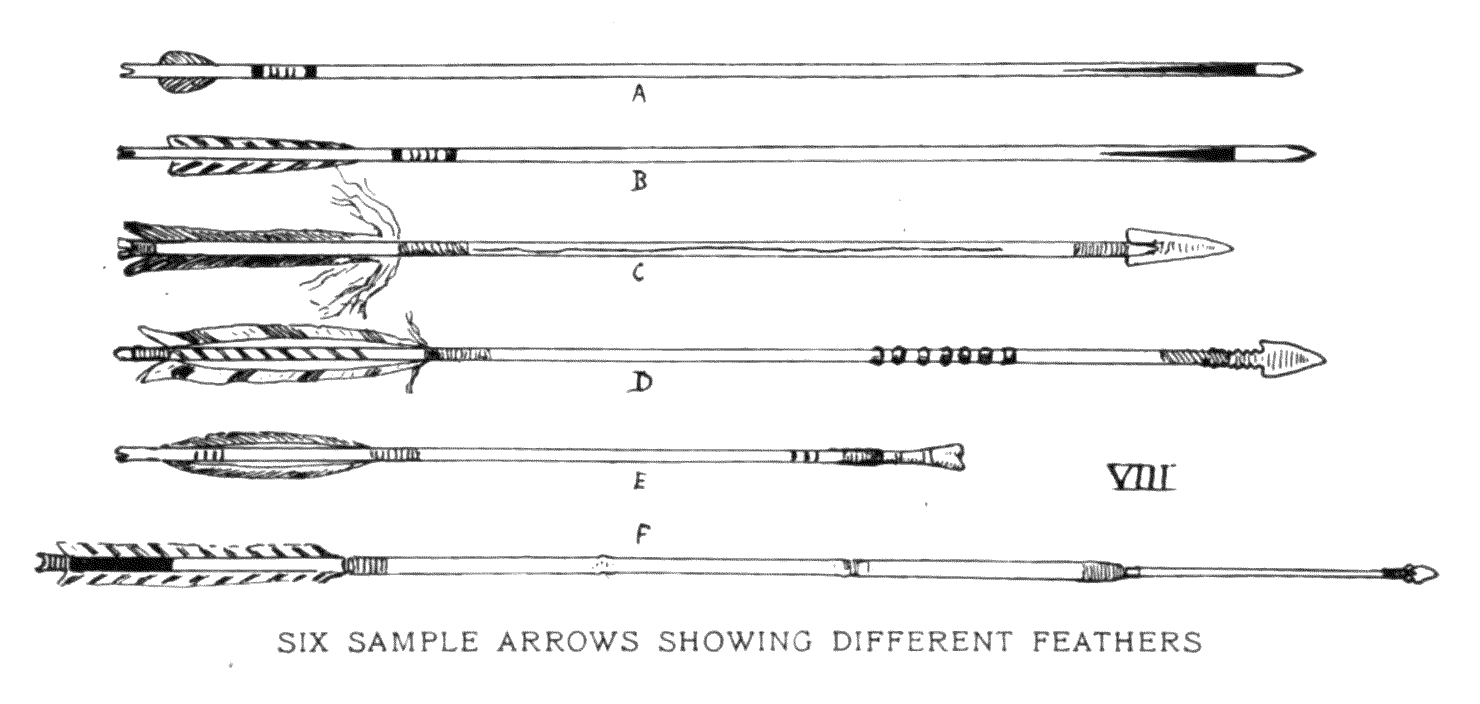SIX SAMPLE ARROWS SHOWING DIFFERENT FEATHERS