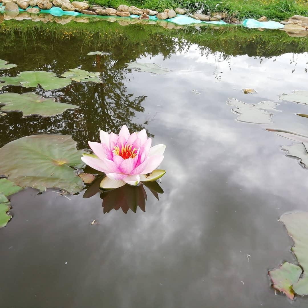 Z největších výkalů, nejkrásnější květina